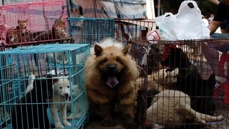 চীনা নগরীতে বন্যপ্রাণী বাজারে নিষেধাজ্ঞা